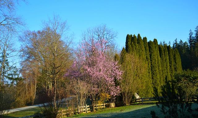 DSC_1417 Frühlings-Morgen