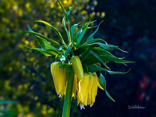 E378 Blumen Flower