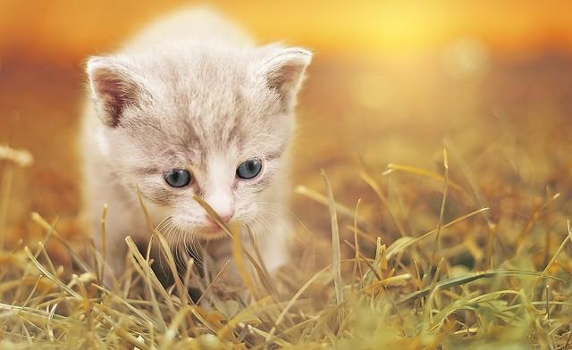 cat-1992140
