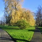 Diverging paths at Moor Park, Preston