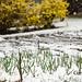 Garlic fertilizer