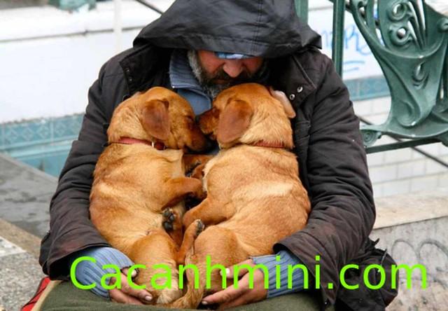 Xúc động khoảnh khắc chó hạnh phúc bên chủ vô gia cư
