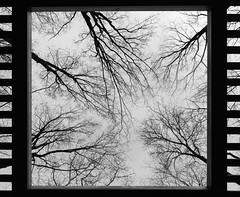 Le film des forêts