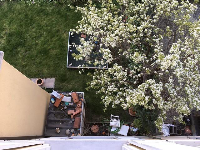 hidden treasures ;-) and spring bursting