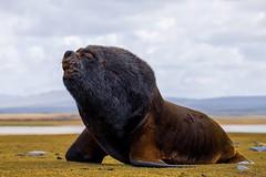 Wildlife @ Whale/Kelp Point, Falkland Islands