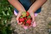 Prairie Berry Glenlea