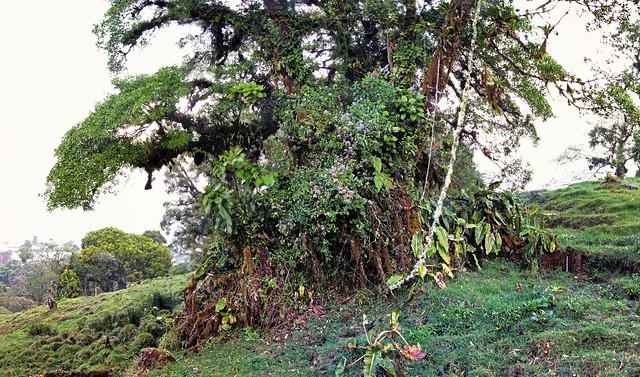 Costa Rica V