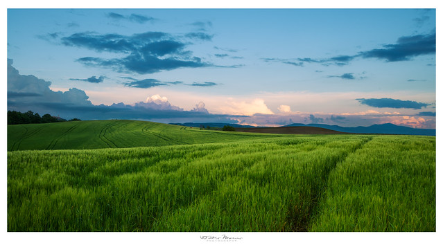 Green fields of Tuscany