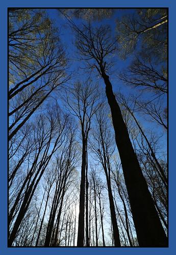 dawm morning sunrise forest trees londonontario darrell colby
