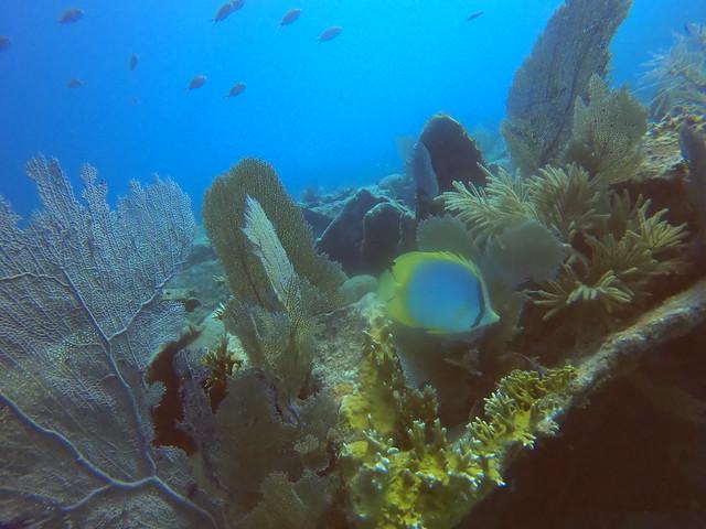 April 21 AM 2021 Diving Guest Tour Images