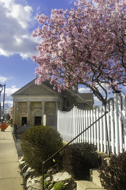Pink Tree and Church