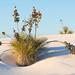 White Sands National Park Photo Workshop December 2021