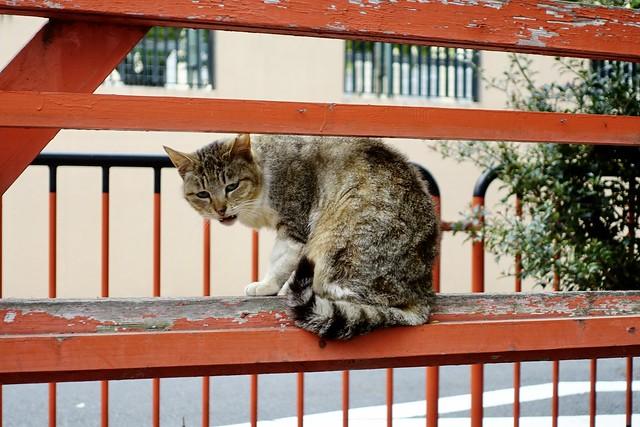 Today's Cat@2021−04−16