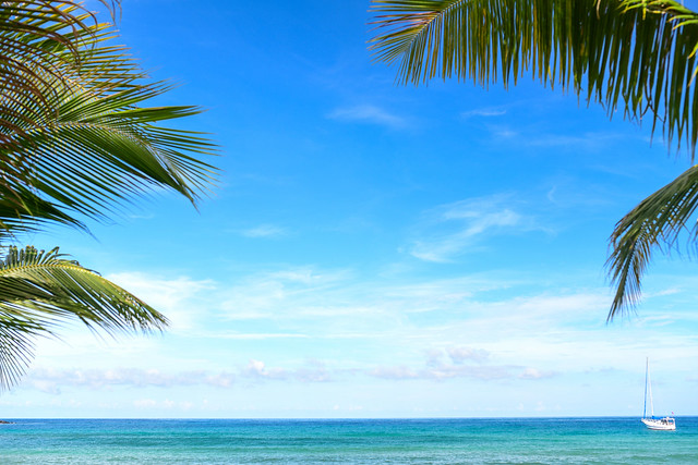Coconut trees and tropical beach for the background.
