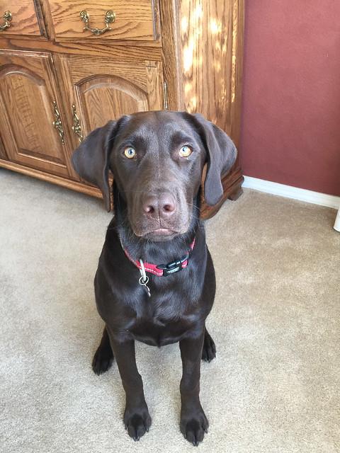 Luna says Good Morning!