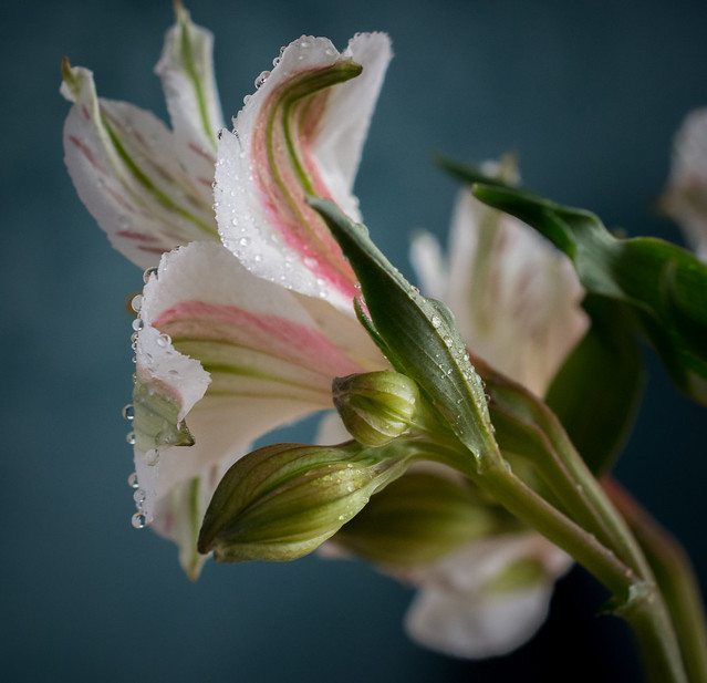 Floral Parade-4