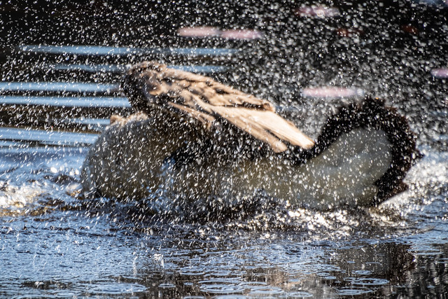 Splish splash I was taking a bath (_K114583)