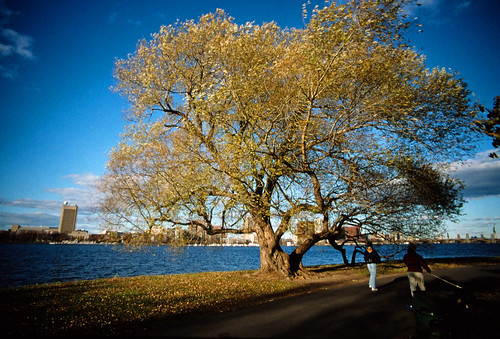 Tree on the Charles River Esplanade (2)