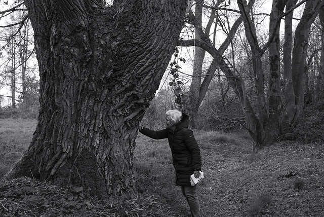 amazing tree @ walking path