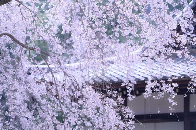 醍醐寺32・Daigoji Temple