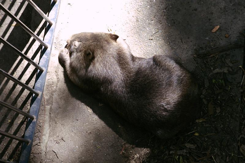 Wombat, Blackbutt Reserve