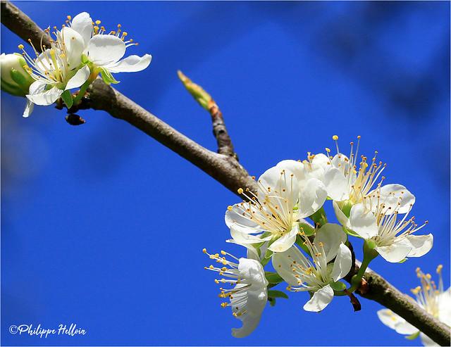 Interlude floral :printemps au jardin ³