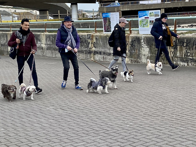 Life on Black Rock - The Dog Walkers