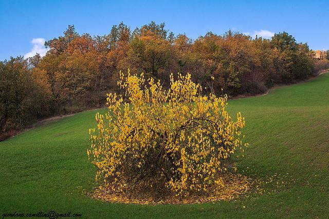 Lo stolto non vede lo stesso albero che vede il saggio.(William Blake)