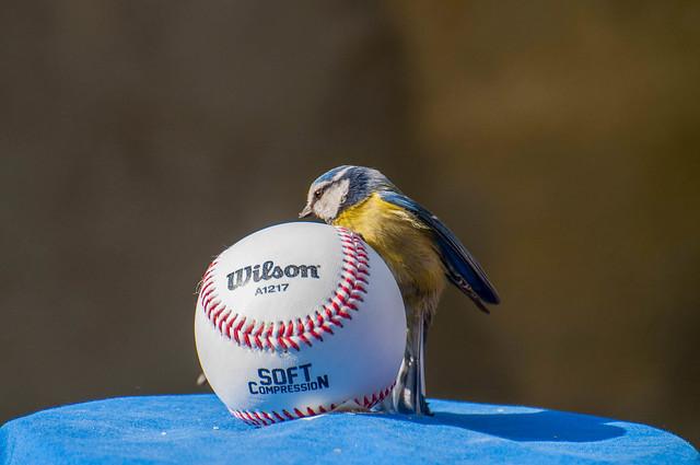 La cincia e il baseball