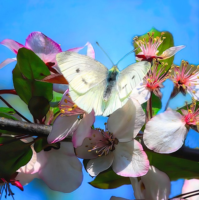Butterfly on Crabapple Blossom