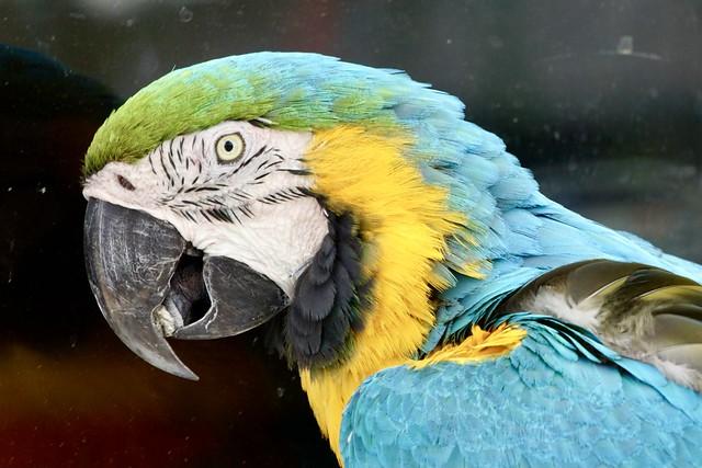 Parrot at Capt. Bob Beck's Marina - Jacksonville, NC