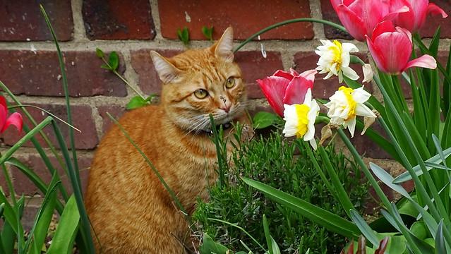 Blumenfreund - Flower Lover