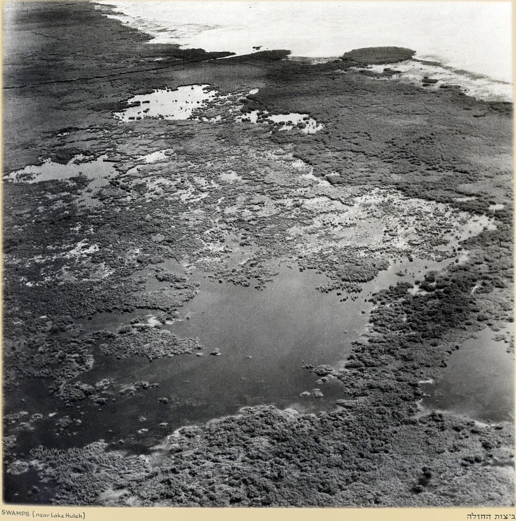 Озеро Хула. Болота