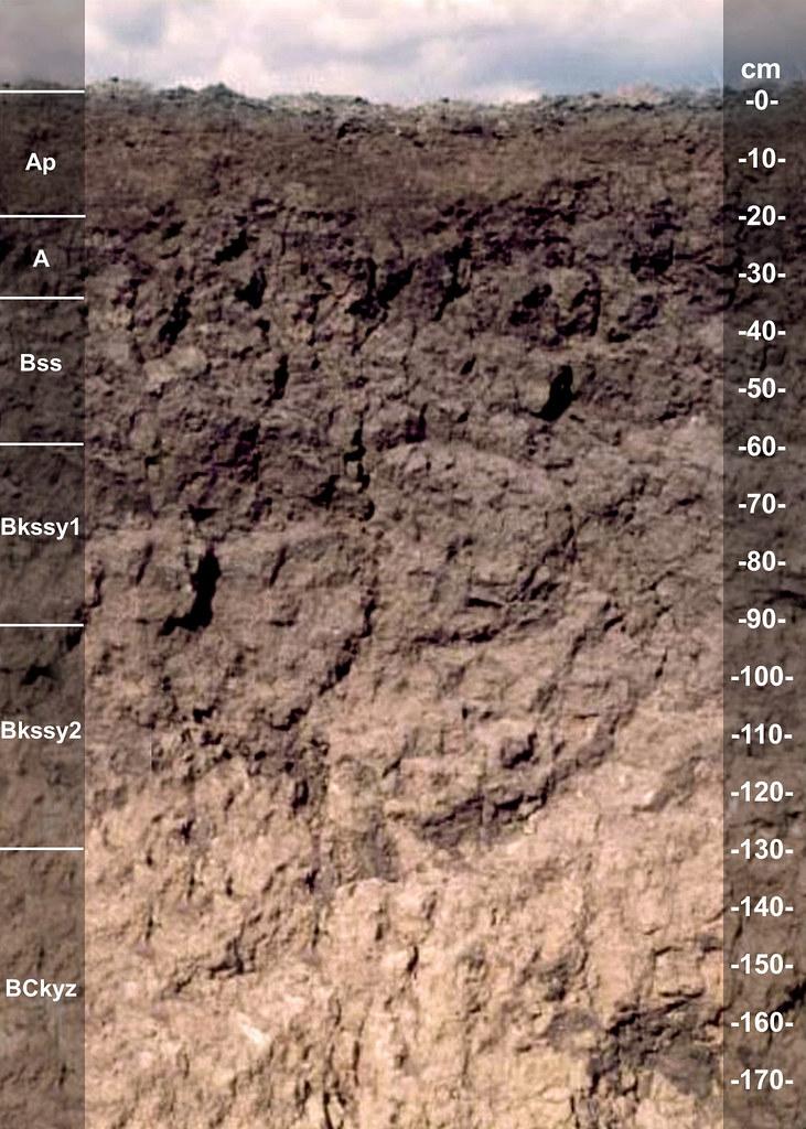 Monteola soil series TX