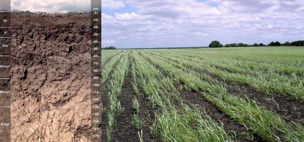 Monteola soil and landscape TX