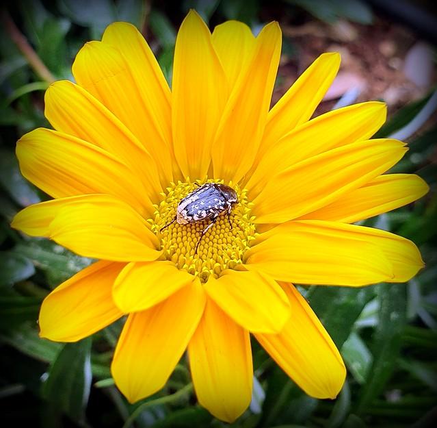 A beetle