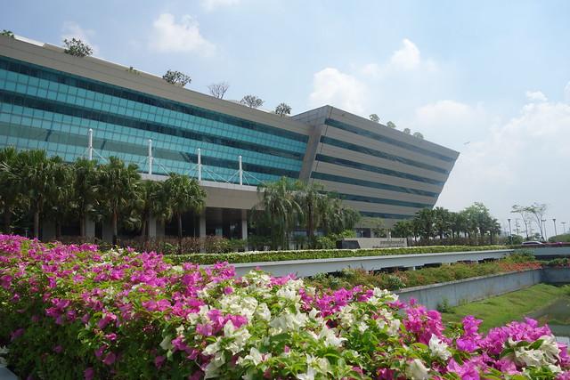 bougainvillea at the government complex