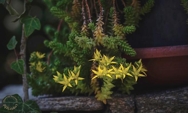 Composizione di piante succulente