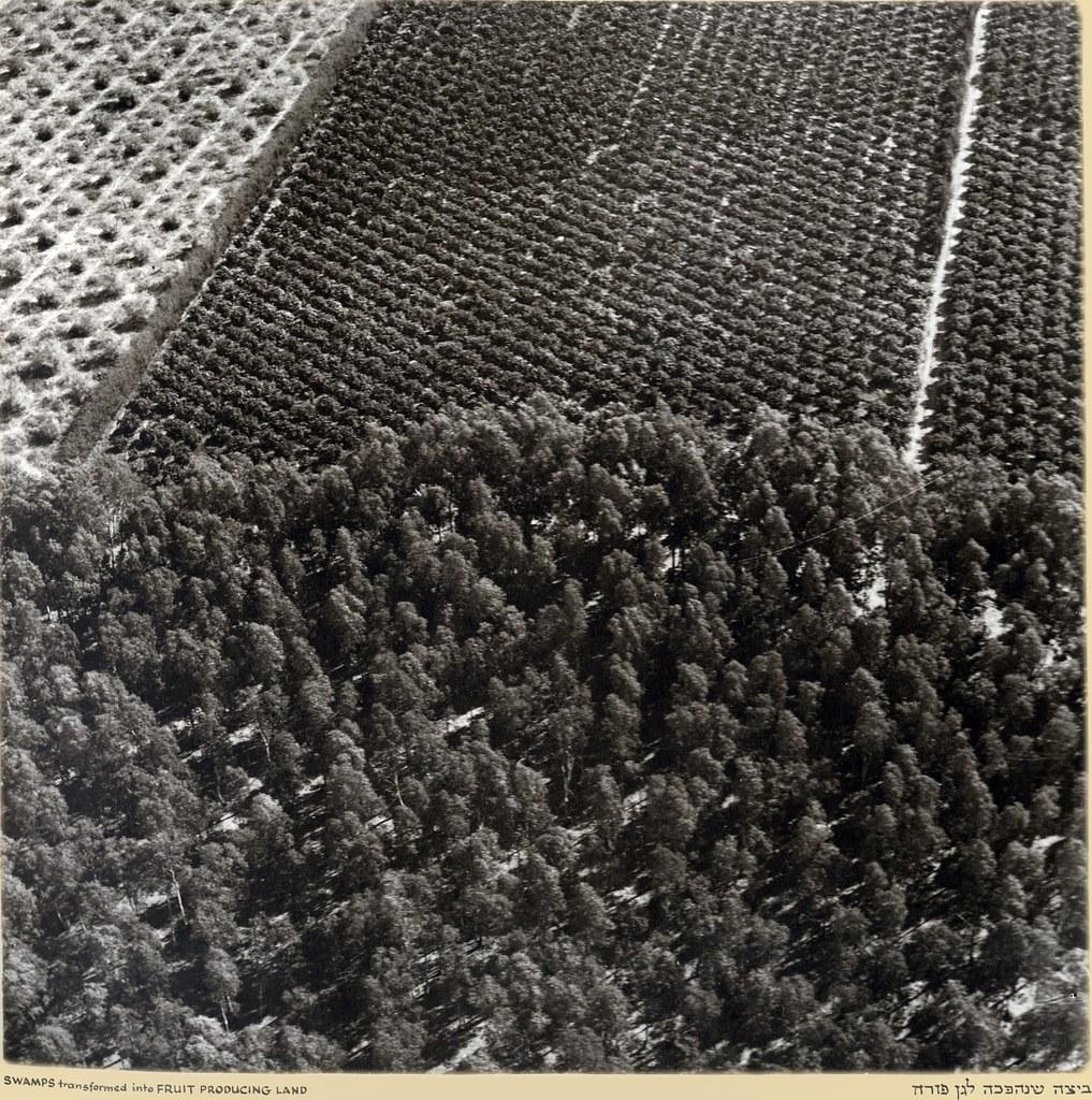 Болота превратились в землю для выращивания фруктов