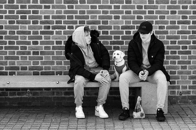 2 lads and a dog