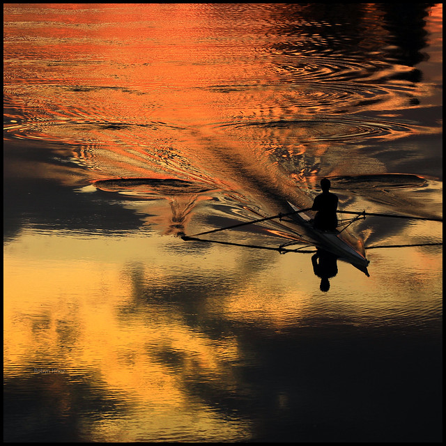 Golden rowing