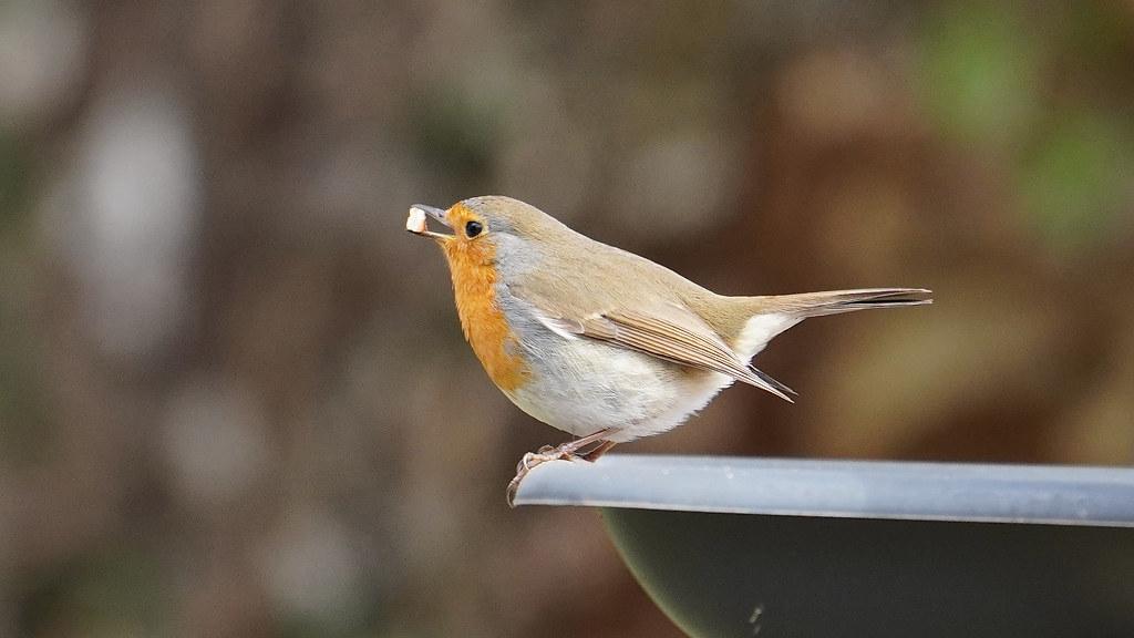 Der Vogel des Jahres braucht auch mal einen Snack   Flickr