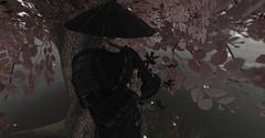 Sakura & Shuriken