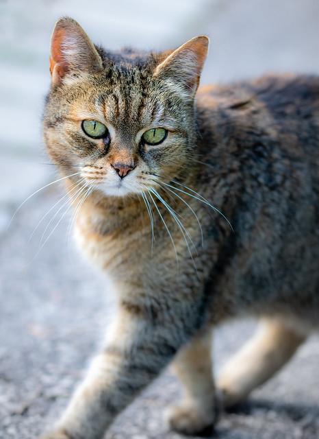 Cat visitor (Explored April 19, 2021)