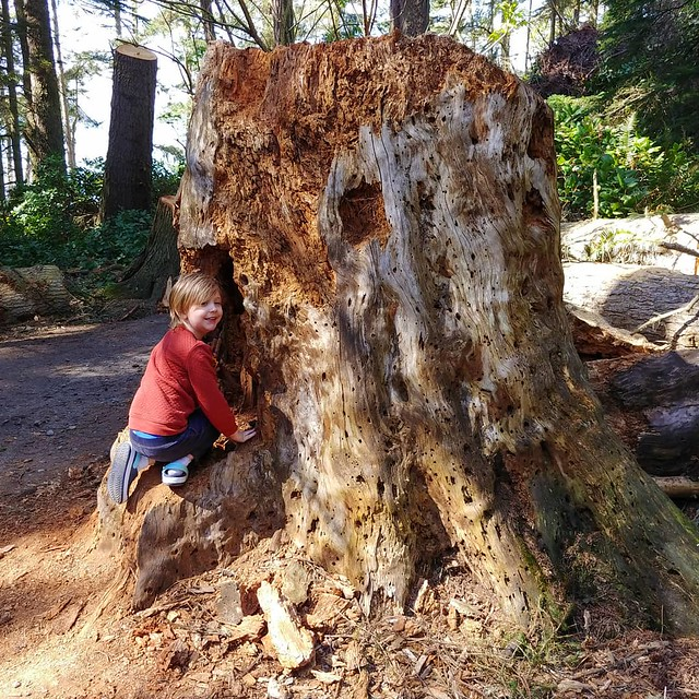 #gnomehome #window #stump #treehouse #🌲 #🍄