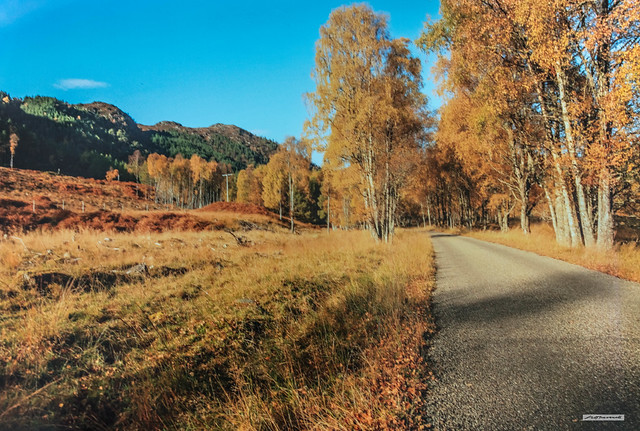 The road to Glen Cannich in autumn, must be