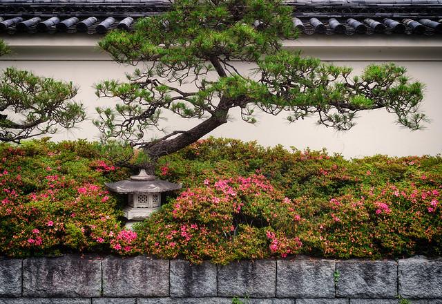 Pine and azalea