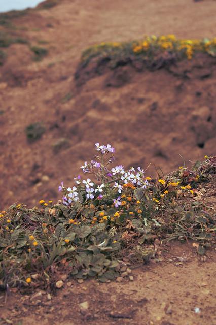 Cliffside Flower