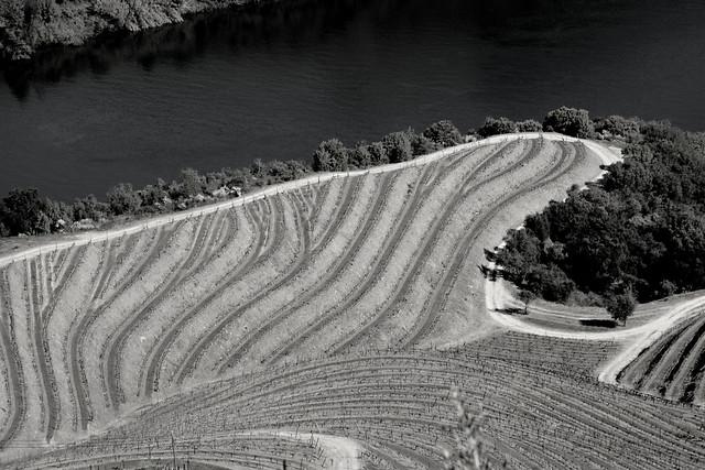 Quinta das Carvalhas vineyards curves