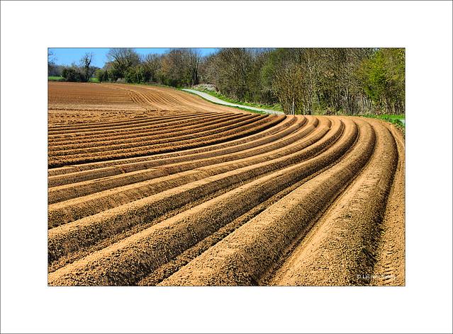 Géométrie agricole...